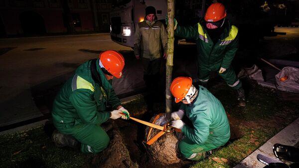 Высадка деревьев около станций метро и МЦД