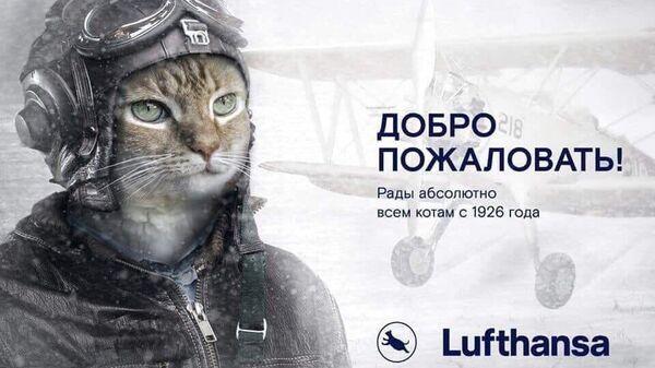 Плакат с котом Виктором