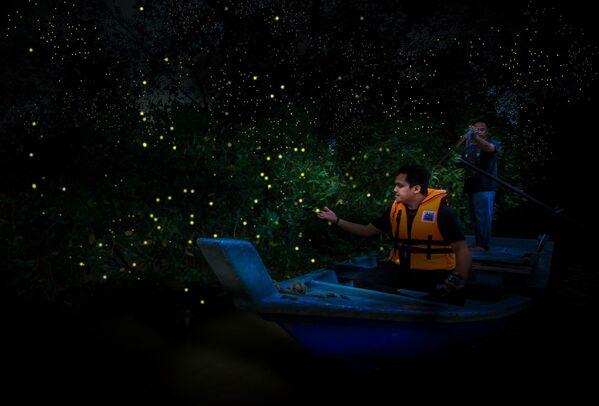 Парк светлячков Кампунг-Куантан