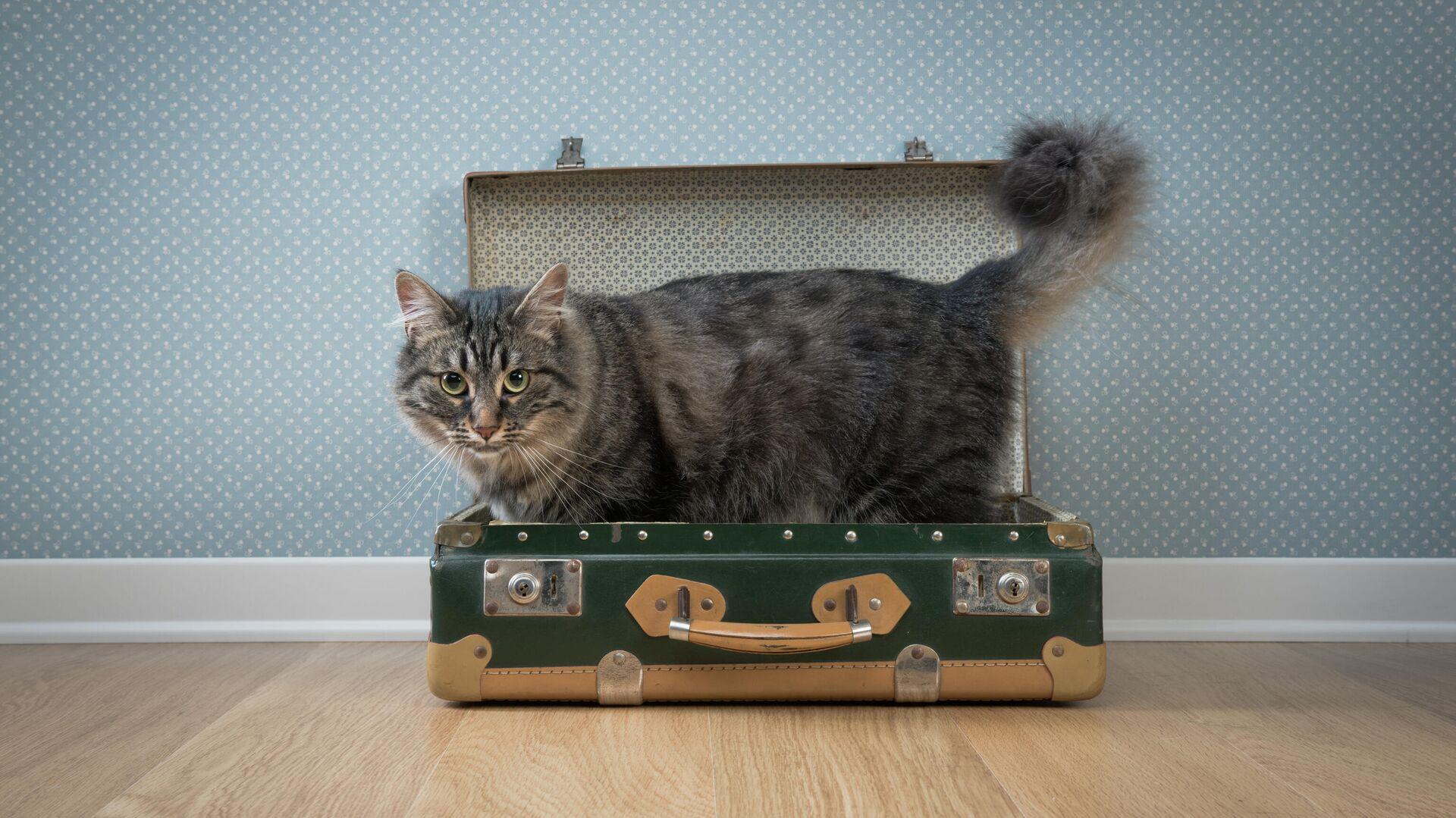 Кот в чемодане - РИА Новости, 1920, 26.10.2020