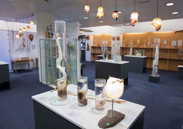 Экспонаты Фаллологического музея в Рейкьявике