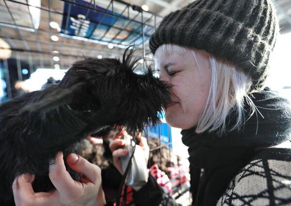 Щенок цвергшнауцера на международной выставке собак в Москве