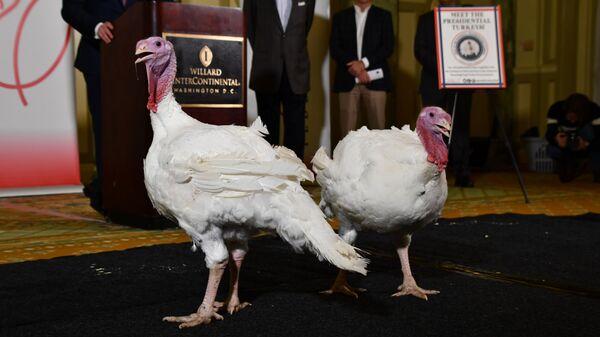 Индейки Хлеб и Масло, которых с День благодарения помилует президент США Дональд Трамп