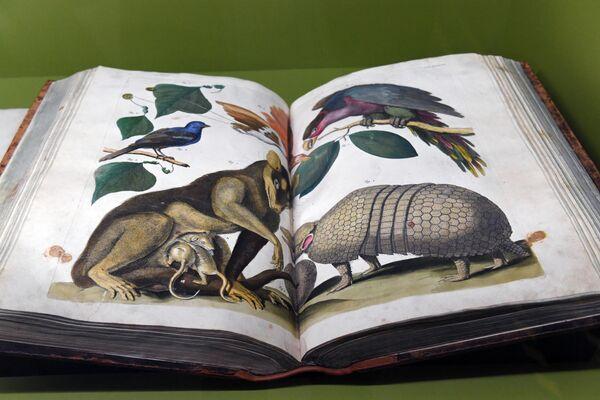 Книга Точное описание богатейшей сокровищницы природных объектов (Альберт Себа, Амстердам, 1734 г.), представленная на выставке Петр. Первый. Коллекционер, исследователь, художник