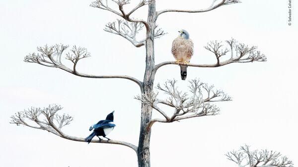 Salvador Colvée Nebot. Шортлист Wildlife Photographer of the Year LUMIX People's Choice Award