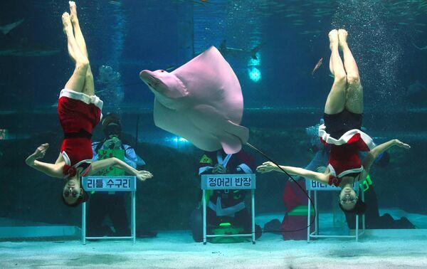 Дайверы в костюмах Санта-Клауса в океанариуме COEX в Сеуле, Южная Корея