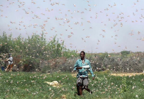 Сомалийский фермер во время нашествия саранчи