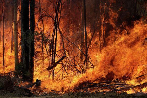 Контролируемый пожар  вблизи Томеронга, Австралия, запущенный в попытке сдержать крупный пожар поблизости. 8 января 2019