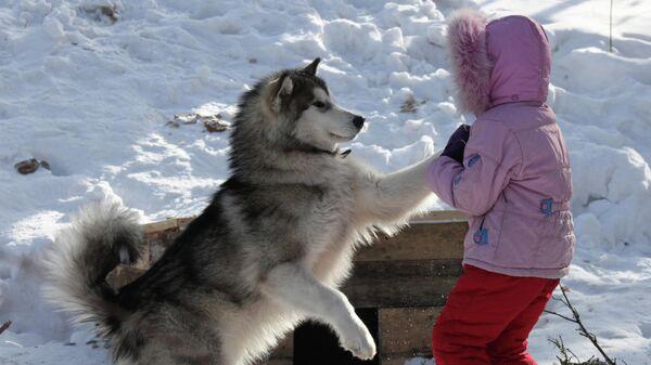 По меркам человека. Ученые вычислили истинный возраст людей и собак