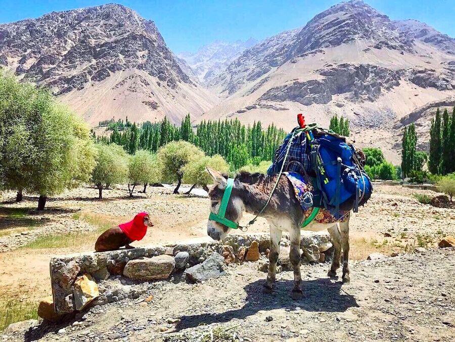Такса Капа и ослик Бро, Таджикистан 2018