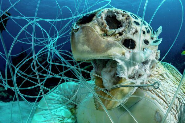 Shane Gross. Работа победителя конкурса 2019 Ocean Art Underwater Photo Competition