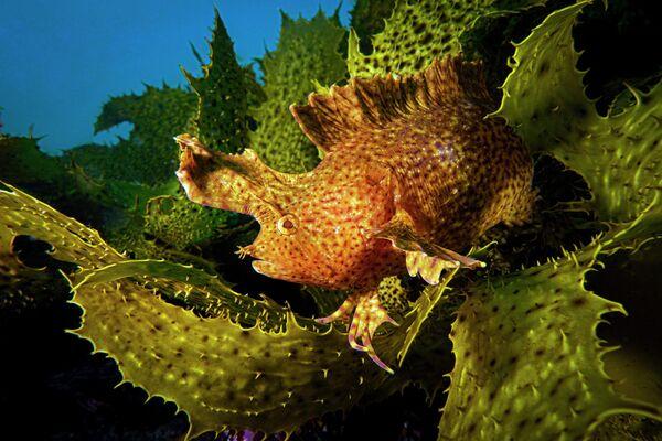 Talia Greis. Работа победителя конкурса 2019 Ocean Art Underwater Photo Competition