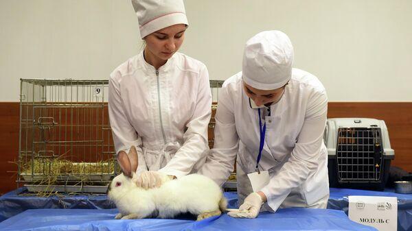 Студенты факультета Биоинженерия и ветеринарная медицина ДГТУ берут анализы у кролика