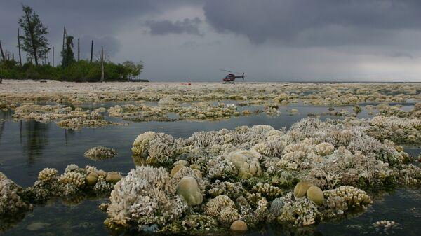 Коралловый риф, погибший из-за подъема дна моря после землетрясения в сентябре 2007 года
