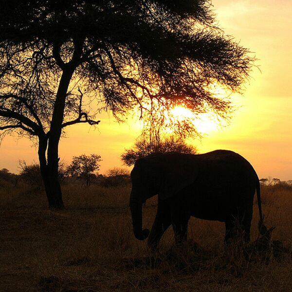 Розовый слоненок обнаружен в Ботсване