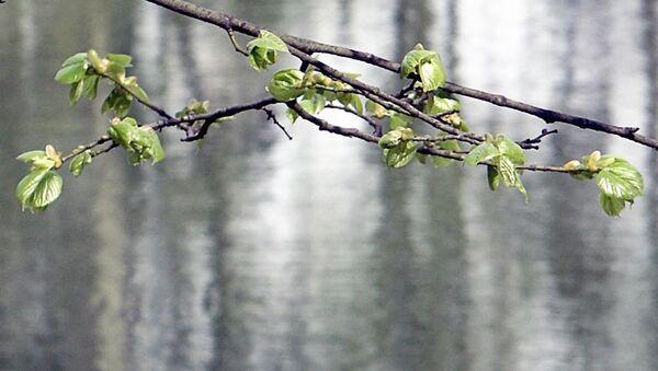 Благовещенье покажет, какая в Москве будет весна