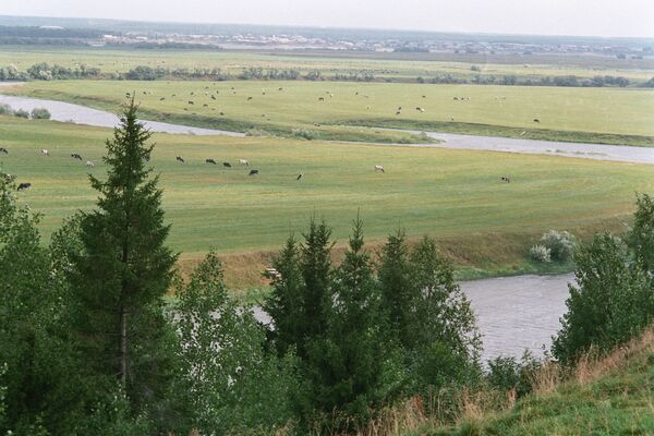 Луга реки Ижмы