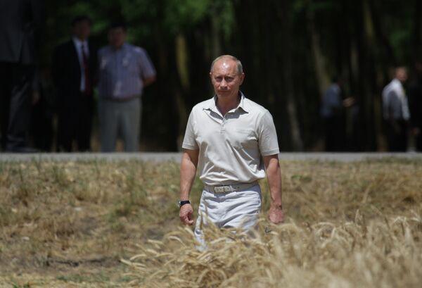 Премьер-министр В.Путин осмотрел пшеничное поле ЗАО Фирма Агрокомплекс