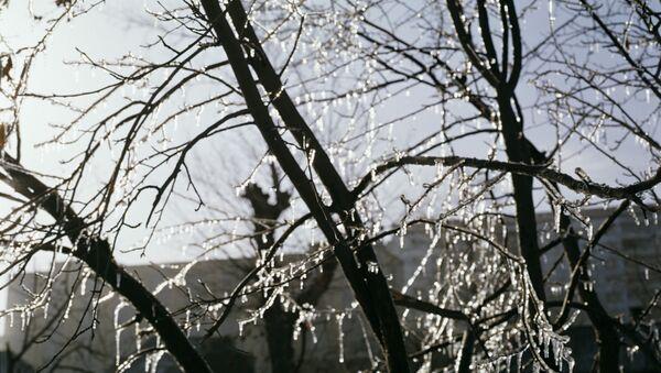 Ветви дерева в инее. Архивное фото