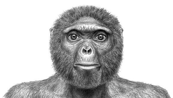 Так выглядели потомки грекопитеков - африканские ардипитеки