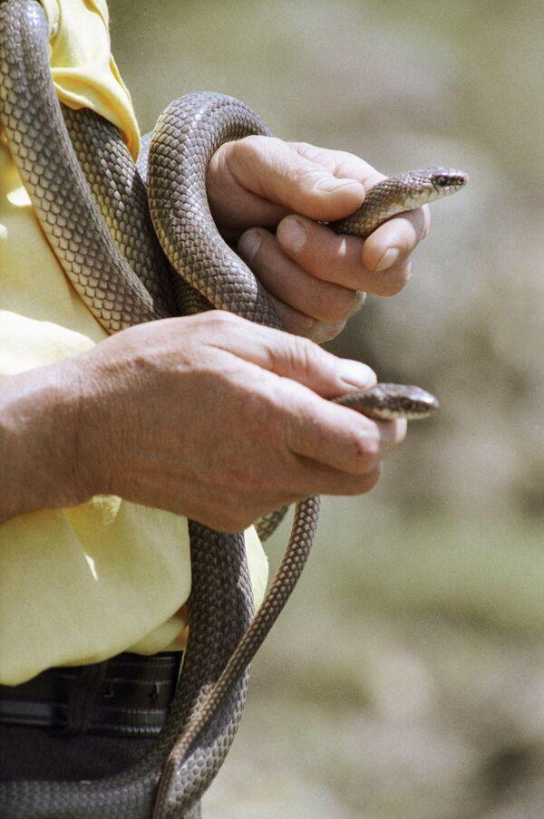 Метровая змея напугала жителей Ставрополя