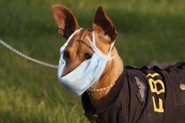 Собака протестует гриппу в Энши