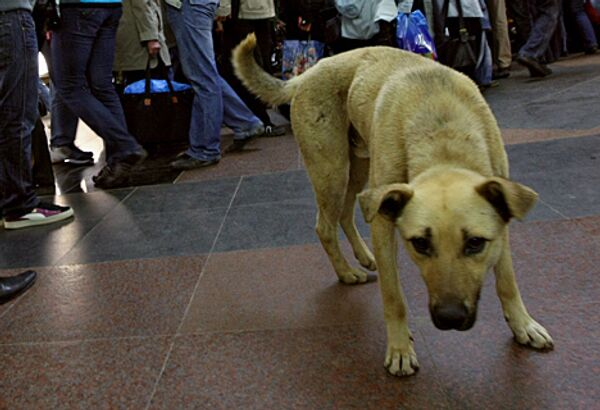 Сильные морозы загнали московских бродячих собак под землю