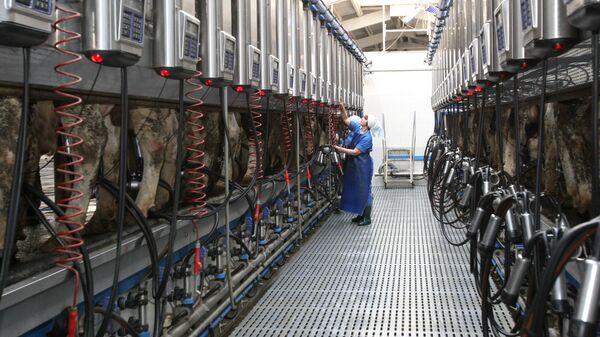 Молочно-товарная ферма. Архивное фото
