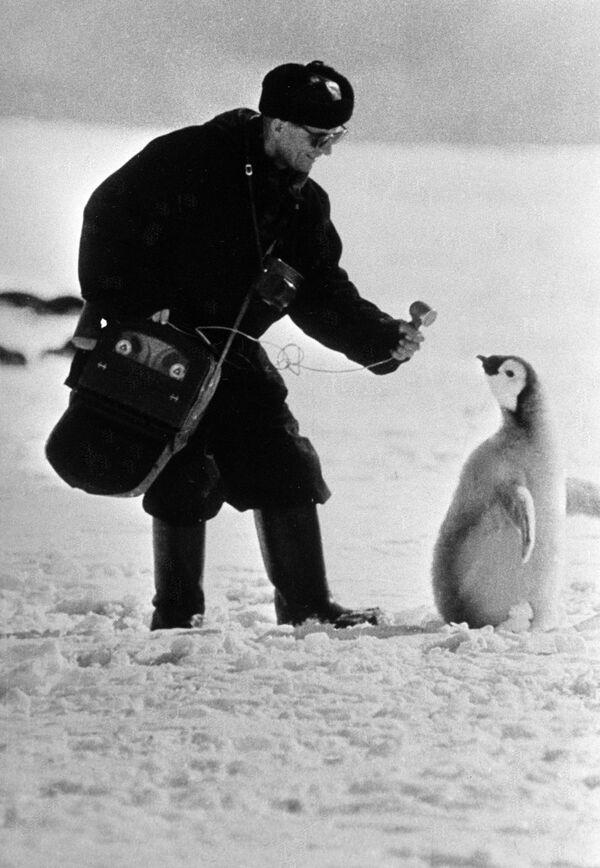 Московский корреспондент берет интервью у пингвина