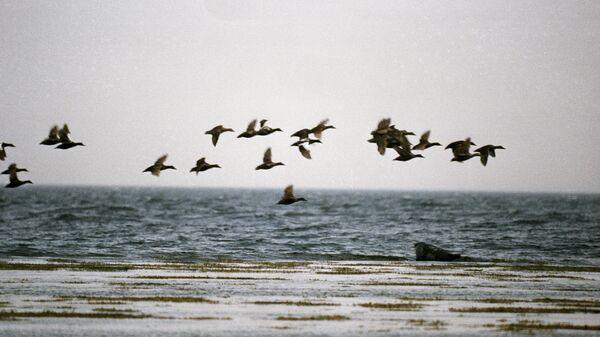 Белое море. Архивное фото