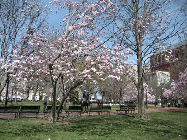 Фестиваль цветущей вишни в Вашингтоне. Архив.