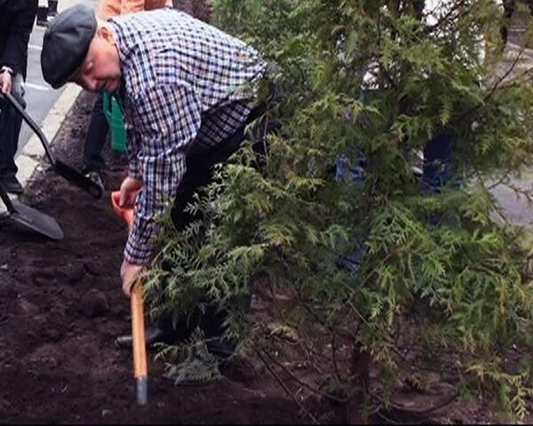 Лужков во время субботника  показал, как правильно сажать деревья