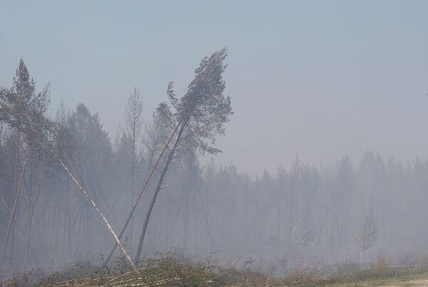 Из-за пожара в лесах Марий Эл перекрыта федеральная трасса. Архив