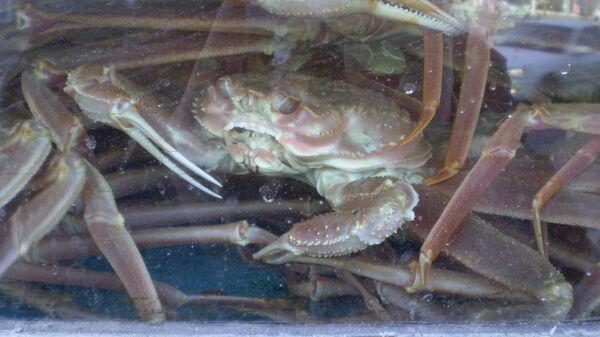 Эксперт объяснил, как теплолюбивый краб оказался в холодном Карском море