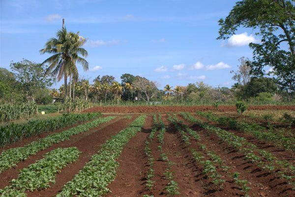 На одной из сельскохозяйственных ферм под Гаваной