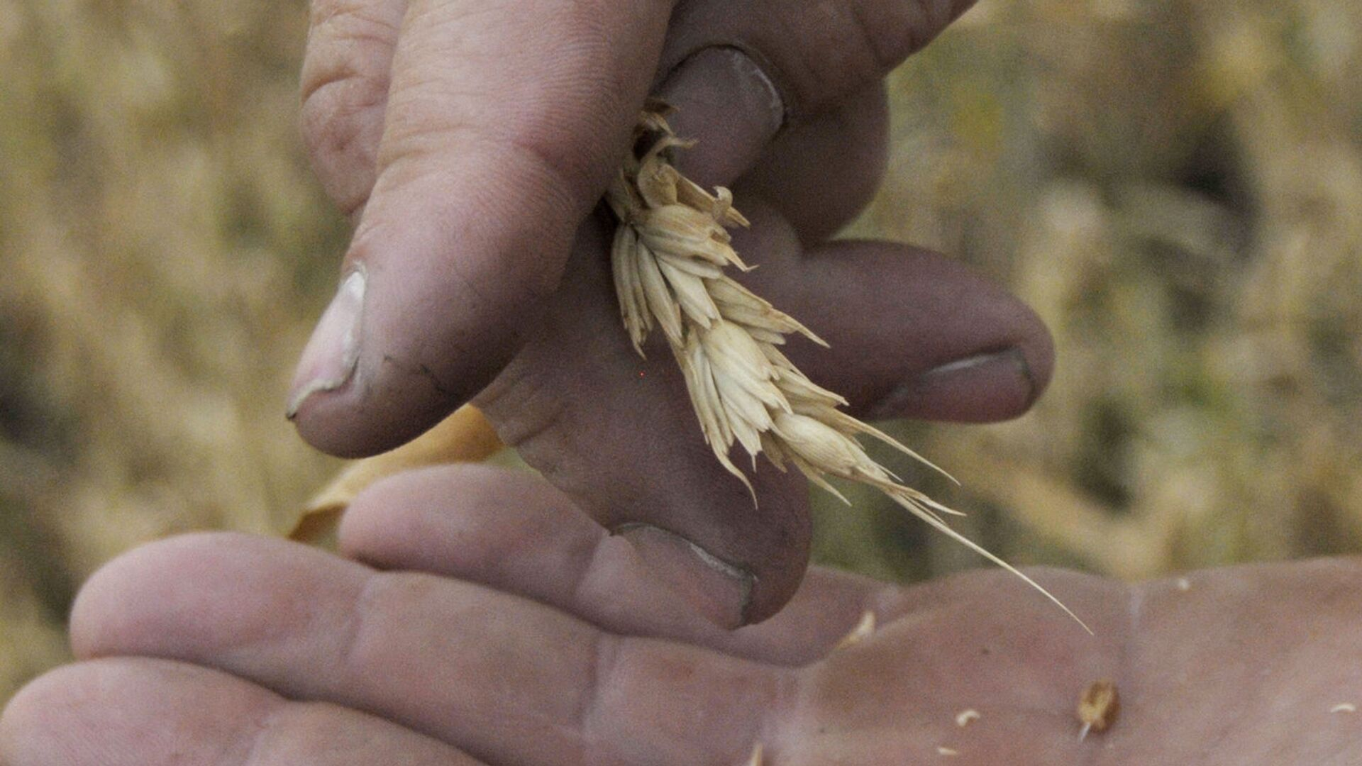 ВНИИ ГОЧС предупредил об угрозе засухи в Оренбургской области на этой неделе