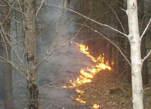 В Свердловской области горит заповедник «Денежкин камень»