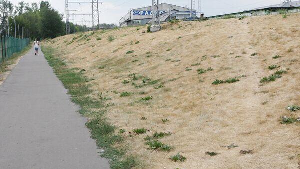 Трава, пожелтевшая из-за аномальной жары и недостатка влаги в Москве. Архив