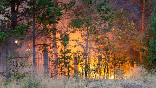 Лес у нас, выходит, беззащитный: хозяева его защитить не хотят, а государство - не может