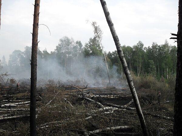 Пожар в Раменском лесу