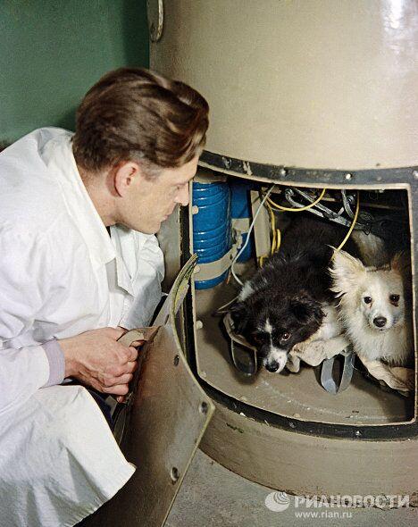 Собаки Дамка и Козявка перед полётом в космос