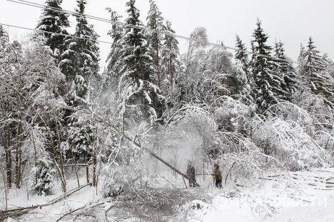 Очистка территорий вблизи автотрасс и высоковольтных линий от падающих обледеневших деревьев