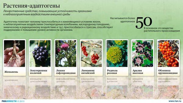 Растения-адаптогены