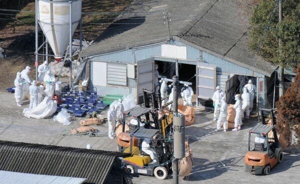 Борьба с распространением причьего гриппа в Японии