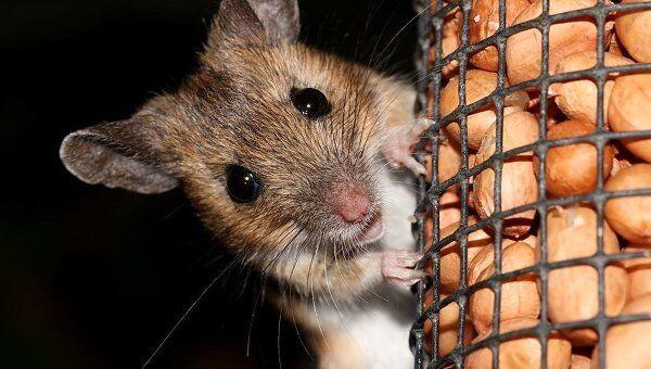 Мышь. Архив