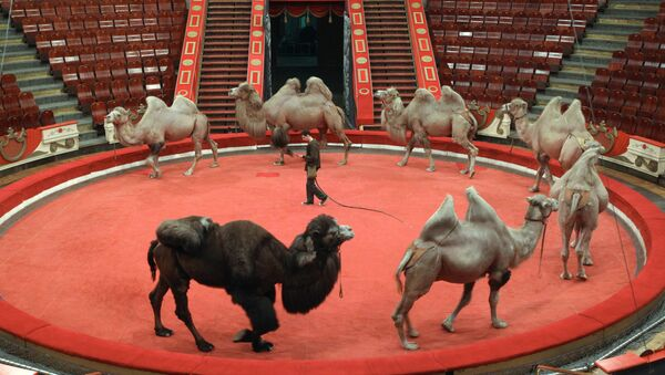 Московский цирк Никулина. Архивное фото
