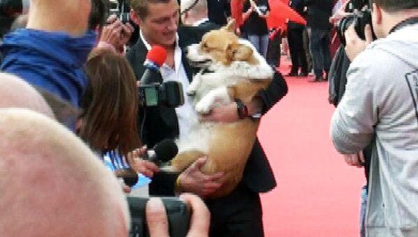 Алексей Воробьев появился на открытии Евровидения в компании собаки