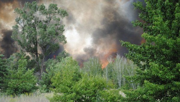 Лесные пожары в Ростовской области