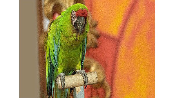 Сторожевые попугайчики: как они спасают жизнь и добро своих хозяев