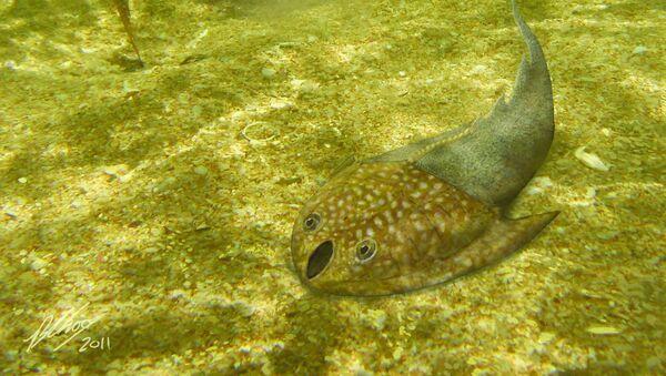 Одна из первых рыб на Земле
